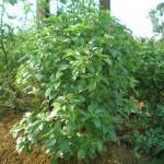 זרעים אורגניים