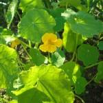 זרעי פרחים אורגניים