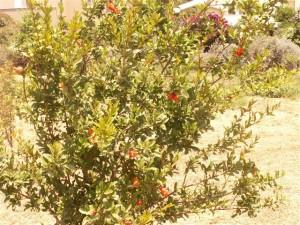 שתילי עצי פרי